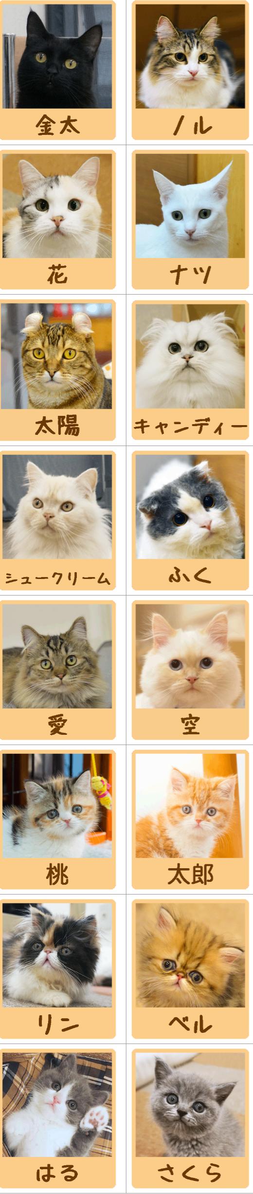 猫ちゃんご紹介
